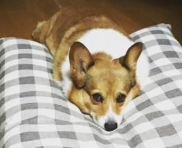 存在することの価値。実家の13歳の愛犬「のんちゃん」が亡くなりました。